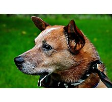 Country Dawg Photographic Print