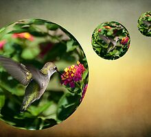 Humming Bird In A Bubble by imagetj