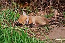 Fox Kit 9 by Michael Cummings