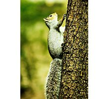 you cant catch me! Photographic Print