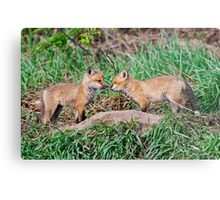 Fox Kits 11 Metal Print
