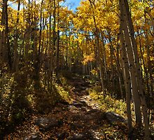 Fall Aspen Trail by Reese Ferrier