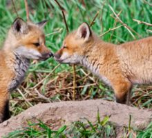 Fox Kits 11 Sticker