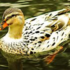 white duck by xxnatbxx