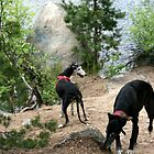 Happy Galgos by homesick