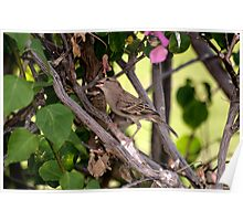 A Sparrow on a branch Poster