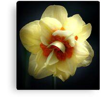 daffodil enhanced Canvas Print