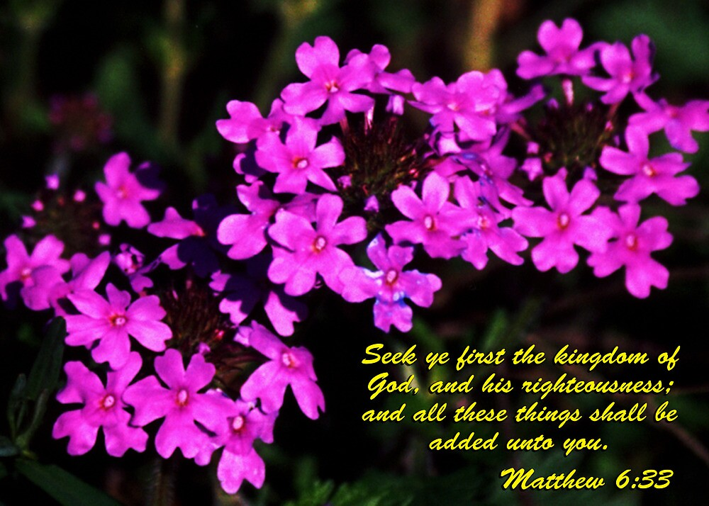 Flowers - Matthew 6:33 by hexhead