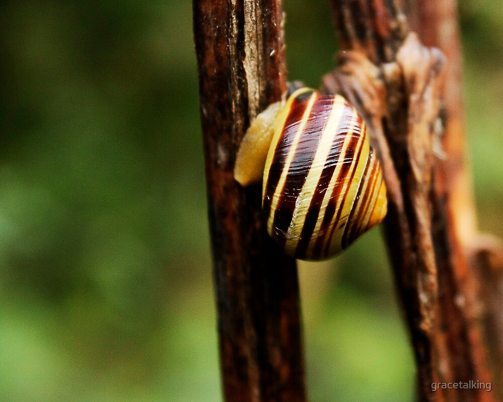 Snail vision by gracetalking
