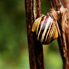 Snail vision by gracetalking