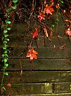 Retaining Wall in Autumn by RC deWinter