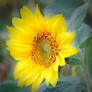 Yellow sunflower by Dfilyagin