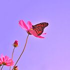 The Butterfly and the Poppy Field by Chelei