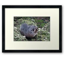 Baby Seal with Puppy Dog Eyes Framed Print
