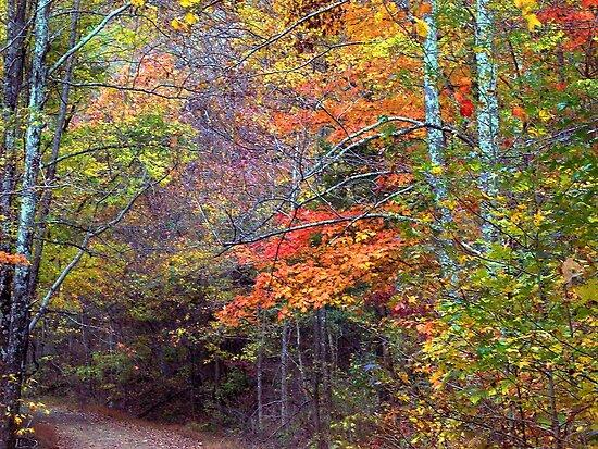Autumn leaves, Dirt roads of Arkansas by David  Hughes