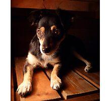 Portrait of Mimosa Photographic Print