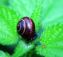 Snail in nettles by Tarolino
