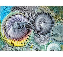 Cosmic Spirals Photographic Print