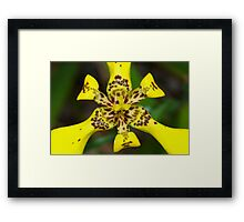 Explosion in yellow Framed Print