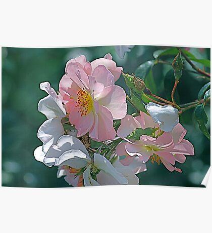 Dog rose  Poster