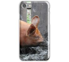 Pig iPhone Case/Skin