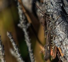 Hiding grasshopper by finnarct