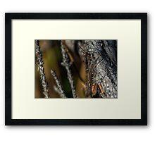 Hiding grasshopper Framed Print