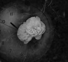 A Rose Has Just A Short Time by Sean Farragher