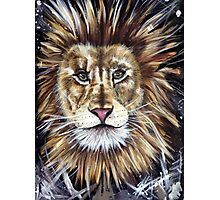 Big Cat Series Lion  Photographic Print
