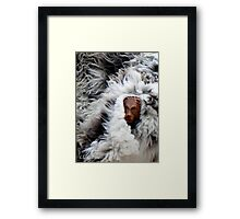 Lion in sheep's clothing Framed Print
