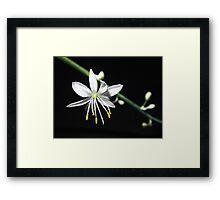 life out of the darkness Framed Print
