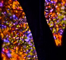 521 # # # # October stained glass window painted by nature , Brown SugarStoryBook ..Views: 521 Thx! by © Andrzej Goszcz,M.D. Ph.D