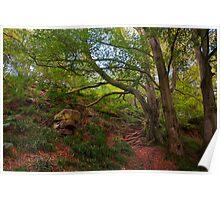 Northumberland woodland 3 Poster