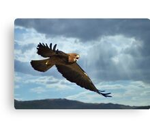 Angry Hawk Canvas Print