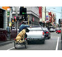 The Brunswick Street Dog Photographic Print