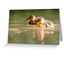 Two Little Ducks Greeting Card