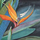 Bird of Paradise by Pamela Hirsch