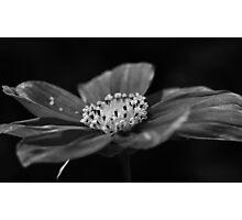 black&white cosmos. Photographic Print