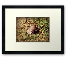 Caught by Surprise Framed Print