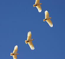 Natural Flight by Robert Elliott