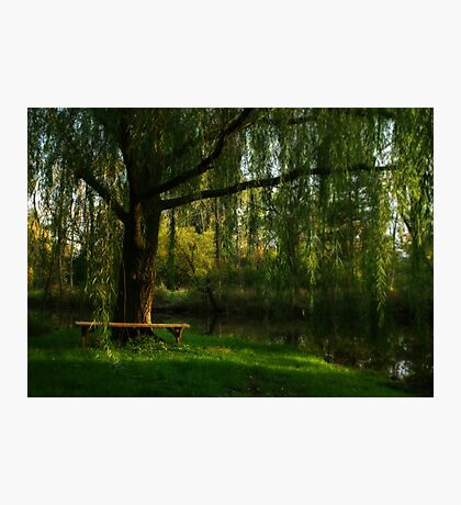 Beneath the Willow Photographic Print