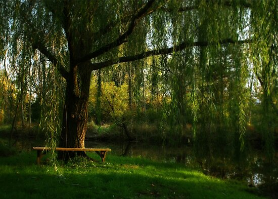 Beneath the Willow by Lori Deiter