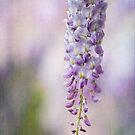 ~ wisteria bloom ~ by Lorraine Creagh