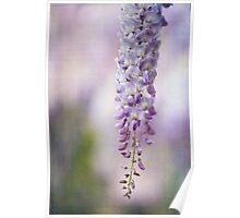 ~ wisteria bloom ~ Poster