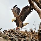 Mother Eagle with Supper by Eaglelady