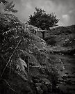 A tree for a season, that stood tall. by clickinhistory