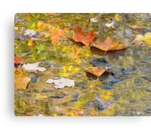 Floating Maple Leaf Gaze Canvas Print