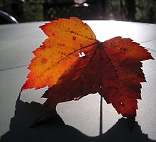 A Leaf and Its Shadow by teresa731