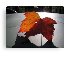 A Leaf and Its Shadow Canvas Print