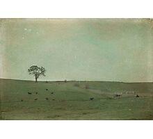 Ten Cows Photographic Print